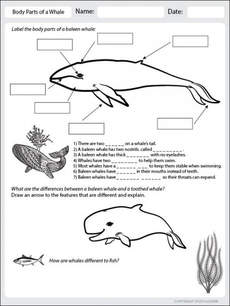 Body Parts Of A Whale Worksheet