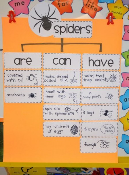 A Place Called Kindergarten  Spider Researchwould Be Good For