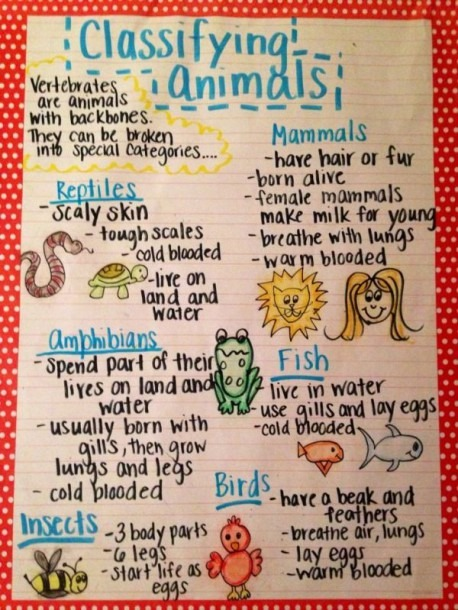 The Animal Classification Anchor Chart I Made For My First Grade