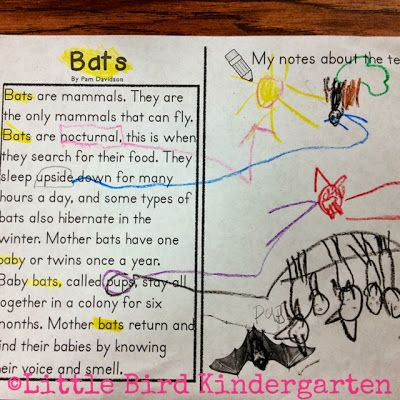 Little Bird Kindergarten Blog Post  Bits About Bats Close Reading
