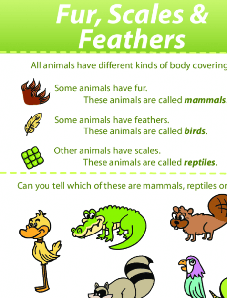 Fur, Scales, And Feathers  Identifying Animals