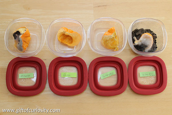 Easy Fall Science  Pumpkin Decomposition Experiment