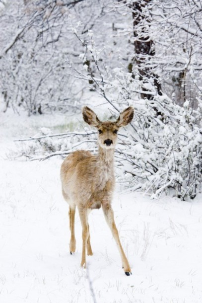 50 Winter Poems For Adults And Kids