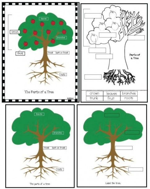 Parts Of A Tree Poster Activity