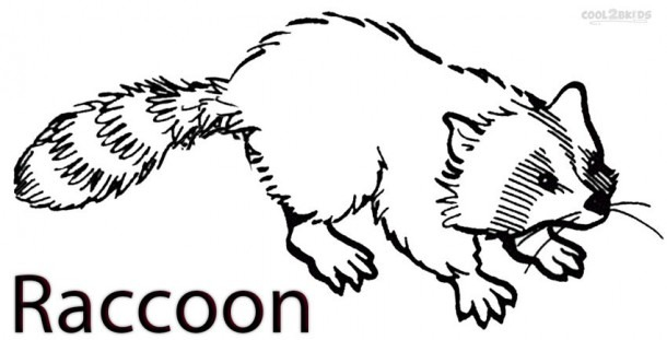 Printable Raccoon Coloring Pages For Kids