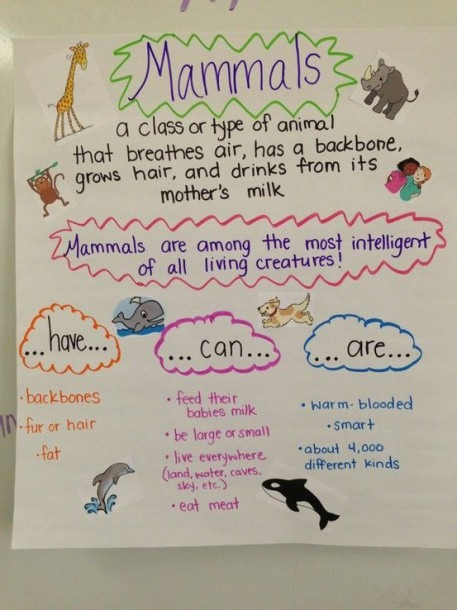 Mammal Anchor Chart! We Just Created This Last Week, The Students
