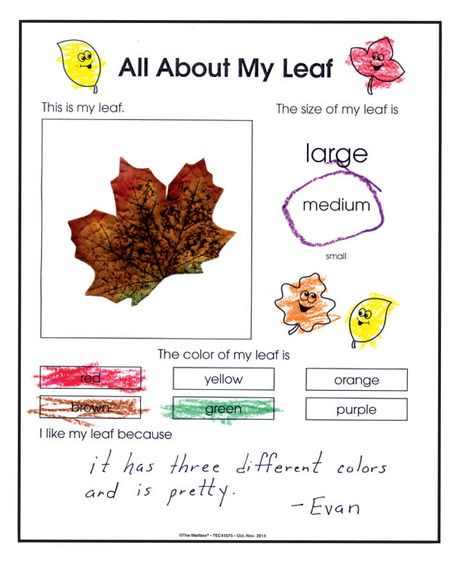 Combine Science And Writing Skills With Fun Fall Activity  Free At