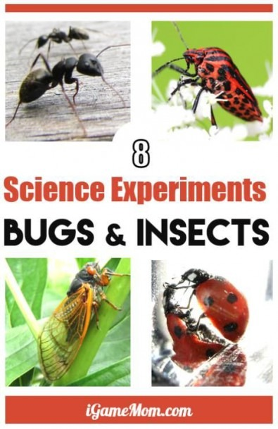8 Simple Science Experiments With Bugs