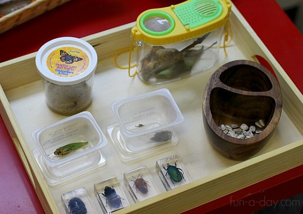 Insects And Plants In The Preschool Science Center
