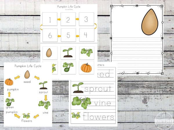 Pumpkin Life Cycle Worksheets (prek